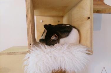 katten-cafe