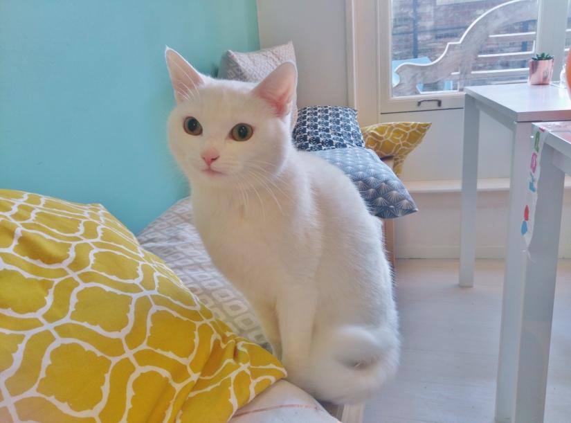 Kattenparadijs Mispoes
